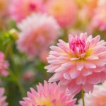 Çiçek 2120x1415