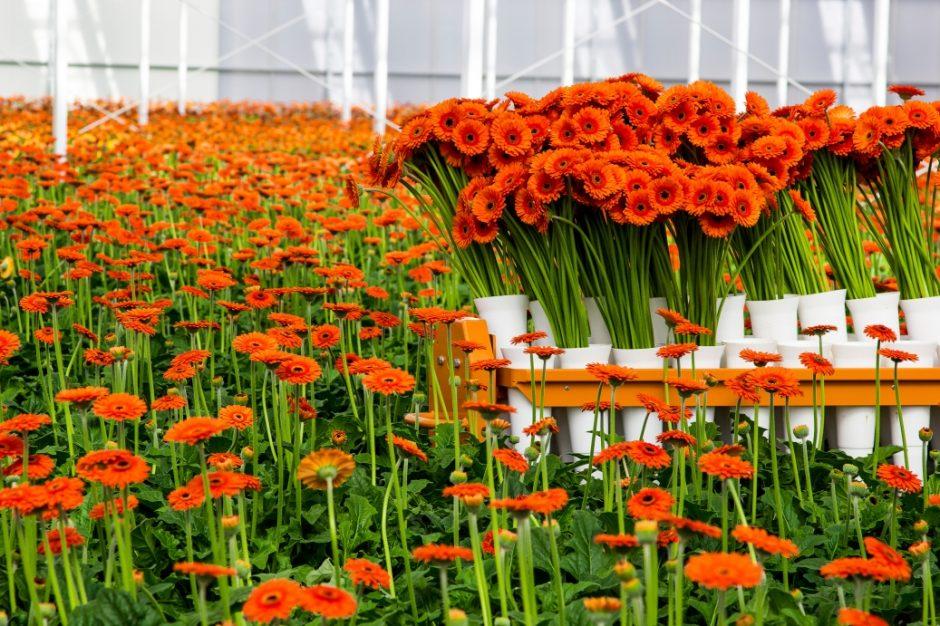 Kesme Çiçekçilik 1037x691