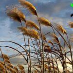 Rüzgar peyzaj3m 1280x720