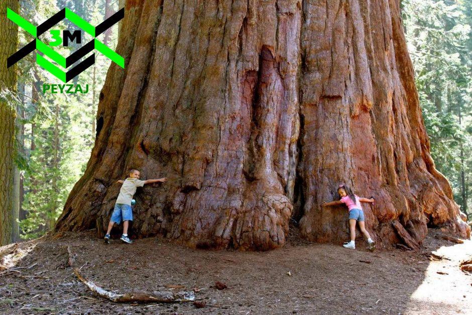 Ağaç 3600x2400 peyzaj3m
